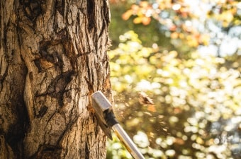 Image of an ax stuck in a tree showing axe throwing as one of the cool things to do in NJ